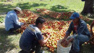 During Harvest (9)