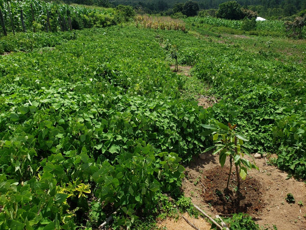 La Campa Avocado Project